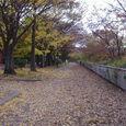 Nishi_park