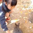 Rabbit__girl