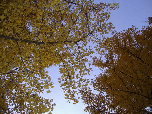 Leaves_and_the_sky