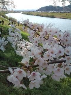 桜の町から
